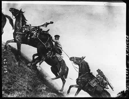 Мумин Аблязов лечил фронтовых коней