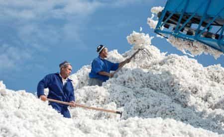 Узбекистан отказался от экспорта хлопка
