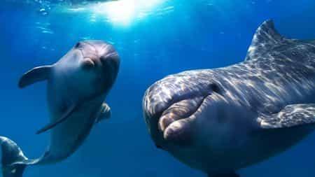 В Черном море гибнут дельфины