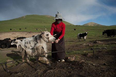 Тибетский кочевой пастух в уезде Юйшу в горах провинции Цинхай