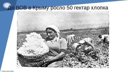 В Крыму опять будут сажать хлопок?