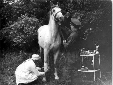 Асан Альчик вывозил с передовой раненых лошадей