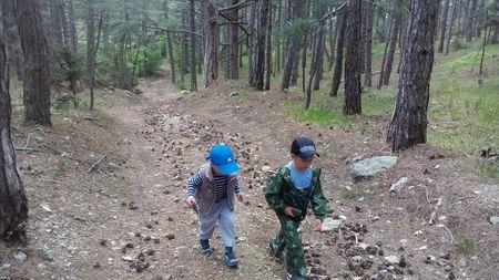 Асан-акай и Вова-акай идут в гору через сосновый лес.