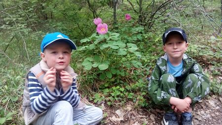 Юные исследователи хорошо знакомы с одним из красивейших растений крымских лесов – Пионе триждытройчатом крымском из семейства пионовых, который цветёт в мае-июне, занесён в Красную книгу