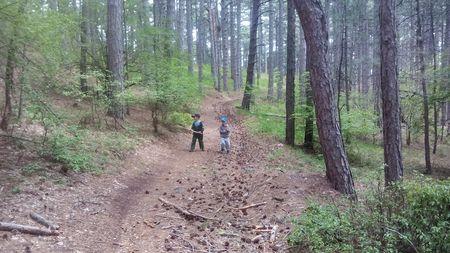 Друзья продолжают свой путь через светлый весенний лес из Сосны крымской, является краснокнижным растением.