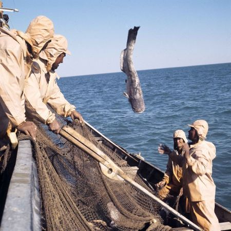Арал снова становится рыболовным