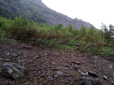 Берёзовые заросли выше кромки леса