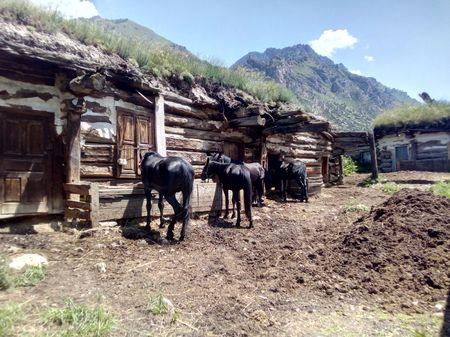 Кони в хозяйстве Исмаила Каппушева. Карачаевская порода лошадей известна с XVII века. Преобладающие масти: гнедая до 40%, тёмно-гнедая – до 27%, вороная –около 28%