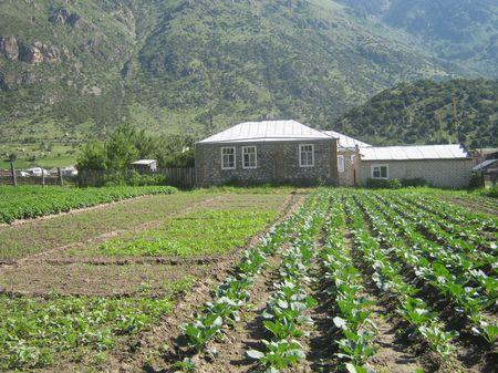 Дом из речных булыжников. На огородах доминируют капуста и картофель