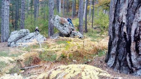 Друзья исследуют большие камни в зарослях золотистого папоротника.