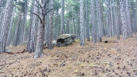 Этот камень друзья нарекли большой черепахой