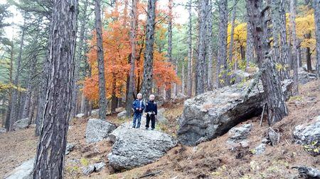 Лес с большими камнями особенно очарователен в это время года.