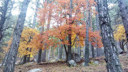 По такому лесу надо идти не спеша, любуясь его красками.
