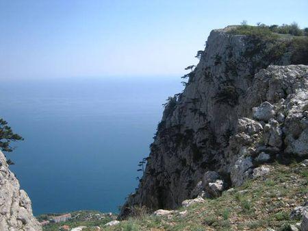 Изумительная жизнестойкость крымской сосны, растущей на крутизне скальных обрывов