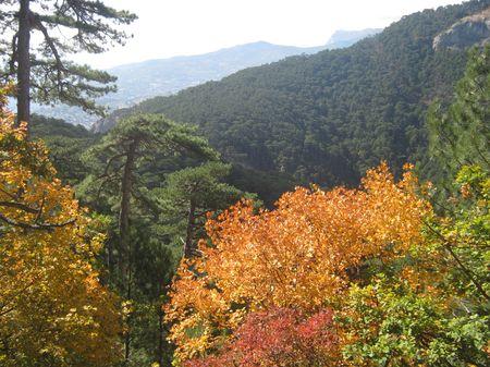 Середина октября. Лиственные деревья одеты в багрец, хвойные — зелены круглый год.