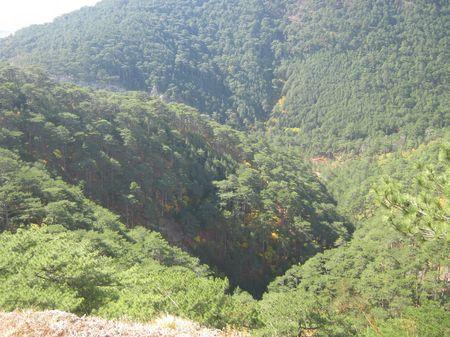 Хорошо виден желтеющий лиственный подлесок в горном сосновом лесу.