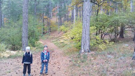 Путь по многоцветному лесу продолжается.