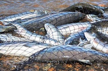 Куда уплыла вся рыба из Иссык-Куля?