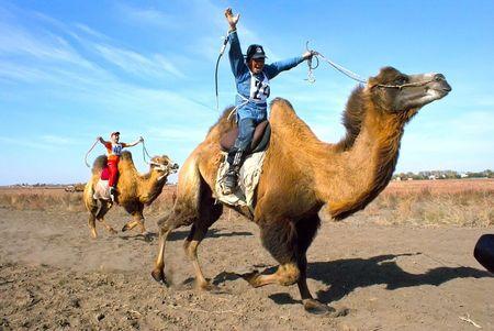Казахи возродили гонки на верблюдах