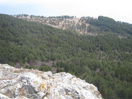 Южная часть Никитской яйлы и сосновый лес.
