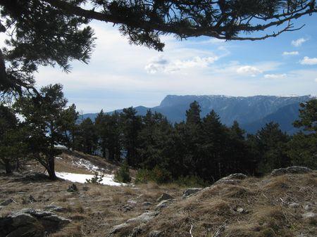 На границе леса и горно-луговой степи.