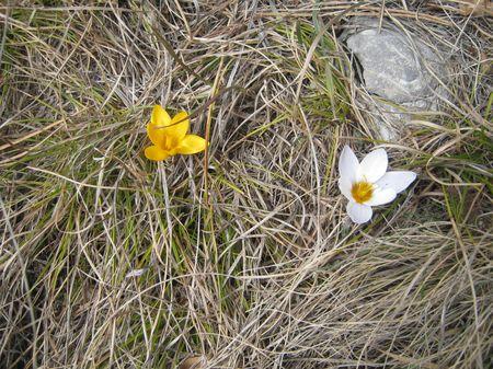 И на яйле уже весна.