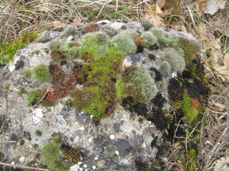Чудные покрытые мхами камни