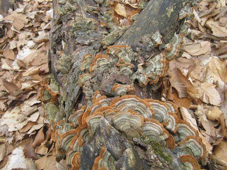 Орнамент из грибов и листьев