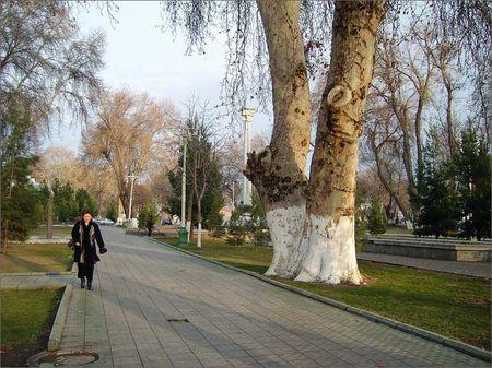 В Узбекистане решили пересчитать деревья