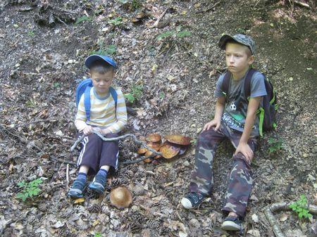 Обнаружены и исследованы грибы маслята