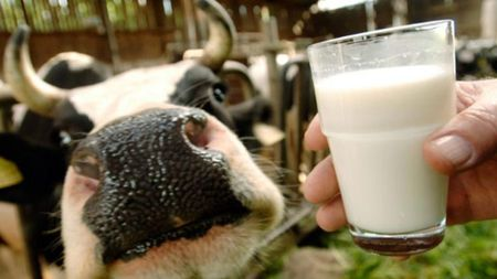 Узбекистан будет покупать молочных коров в Белоруссии