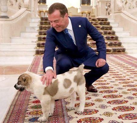 Гурбангулы подарил Медведеву алабая