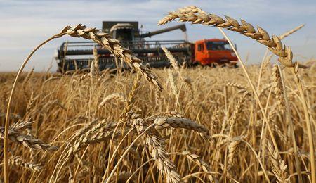 В Крыму собрали много зерна