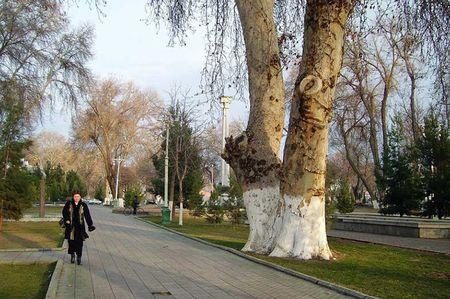 В Узбекистане перепишут все вековые деревья