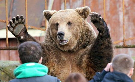Тайган закрыт, куда девать медведей?
