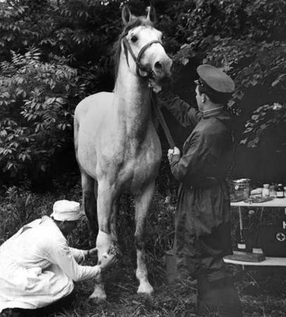 Шевкет Джемилев спасал раненых и больных лошадей