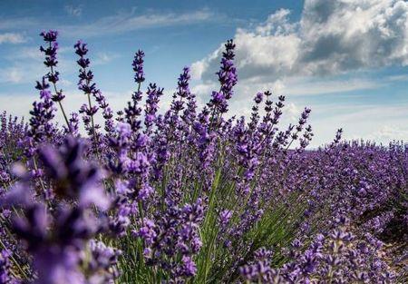 Как правильно употреблять крымские травы