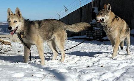 В Карачае есть Долина волков